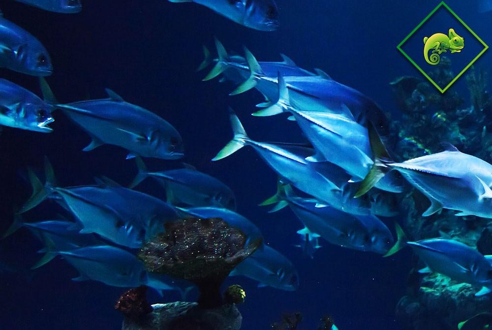 akvárium építés és karbantartás